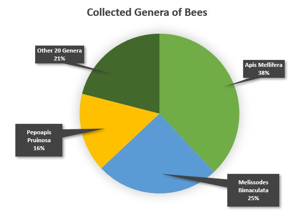 Collected Genera of Bees